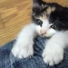 可愛い子猫の姉妹です。