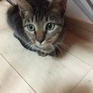 生後4ヶ月のメス猫ちゃん☆抱っこなでなで大好き