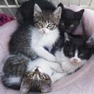 生後2ヶ月前後。子猫の里親さん募集します。