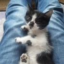 産まれて1ヶ月の子猫です!