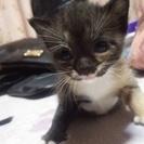 産まれて1ヶ月の子猫です