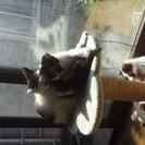 4月1日頃生まれた子猫ちゃん3匹。
