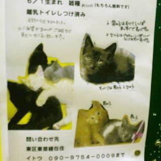 【子猫】かわいい子猫もらってください♪