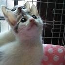 8月7日、14日子猫たちの譲渡会です。キジシロ♪たくさんいます。...
