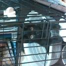 2、3ヶ月位の黒猫メス♀