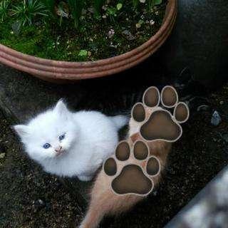 里親 関西 猫