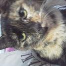 サビ色の成猫