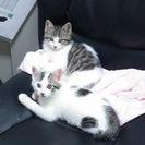 家に迷い混んで保護した兄弟猫です
