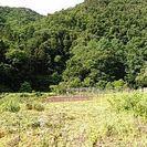 田んぼや空き地の草刈いたします。