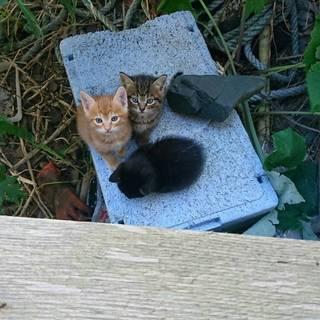 里親募集。かわいい子猫ちゃん達です。