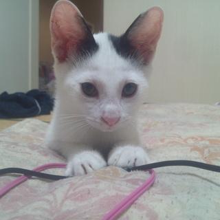 9月4日に保護した今3ヶ月位の男子猫の里親さんになってください