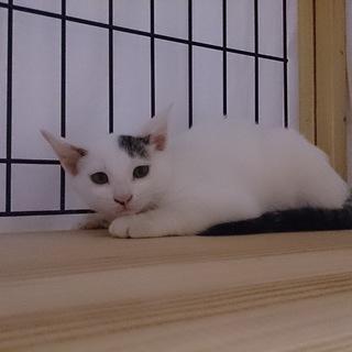 生後約2ヶ月の白黒ちゃんです♪