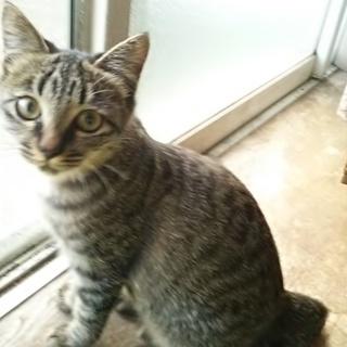 生後約4ヶ月半の子猫(メス1匹、オス1匹)の里親になってください