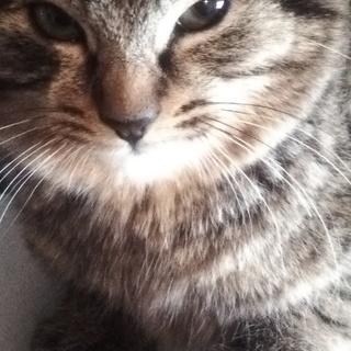 可愛い子猫です(=^ェ^=)