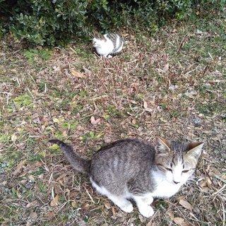 地域猫活動で里親様募集です