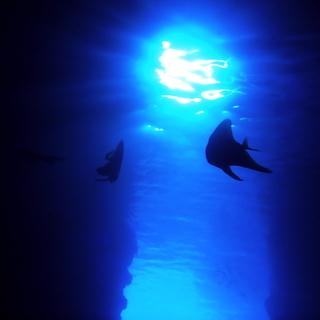 青の洞窟で体験ダイビングや体験シュノーケルをご案内!