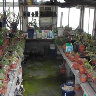 蘭「植物」育てたい方