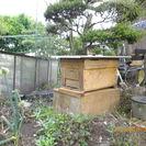 ミツバチの巣箱(日本ミツバチ入り)