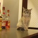 猫ちゃんたちと食事やお酒を楽しみませんか?当店ではバーカウンター...