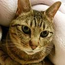 ペットシッターが飼い主様に代わって大切なペットのお世話をいたします