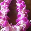 hula halau waiola(フラ ハラウ ワイオラ)