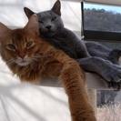 猫カフェまるまり~猫のいる癒しの空間で、ほっこり、くつろぎのひと...