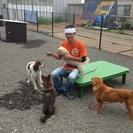 神奈川県に犬 猫避難所ができました。      IN清川村