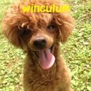 ワンちゃんの家庭教師 Winculum(うぃんくるむ)