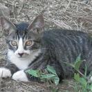 5匹の子猫たちの里親様を探しています。