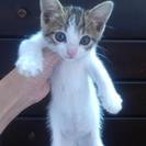 子猫の里親募集です!