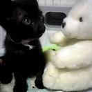 黒猫ちゃんの里親さんになってあげて下さい