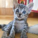 7月19日生まれの子猫、可愛がってくださる方に…
