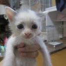 殺処分を免れました 離乳中の人なつこい子猫です