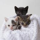 大磯で野良ちゃんが仔猫を産んで困っています。