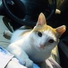 近所のゲームセンターで置き去りにされたかわいそうな猫