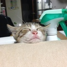 愛嬌がありめっちゃ可愛い仔猫です。