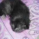 7月に生まれたメス猫の里親募集中
