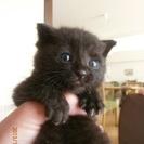 ★可愛い子猫貰ってください★