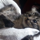 子猫の里親様を募集中です----11月11日更新----