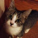 2ヶ月半くらいの子猫♀