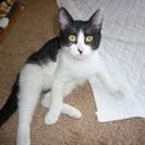 里親さんがみつかりました。・・・・・4か月位の子猫です