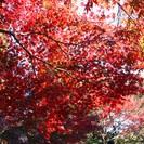 独身男女限定! 12/7 鎌倉アルプス日帰り紅葉ハイキングと鶴岡八幡宮