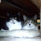 仲良し兄弟猫maoと黒丸ちゃん(生後6ヶ月)