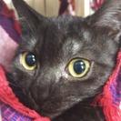 里親さん決定 美しい雄猫 ブラックスモーク
