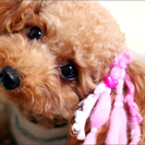 子犬販売、ブリーディングスタッフ募集。大阪府茨木市です。