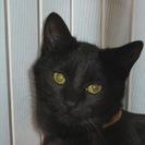 4ヶ月 丸顔の黒猫 おっとりびびりのもずくちゃん