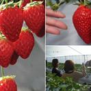 【4月27日開催】イチゴを食べてジャム作って温泉を満喫する贅沢三昧ツアー