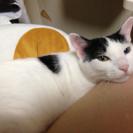 8歳の成猫 白黒