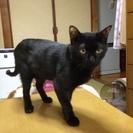 5ヶ月くらい♂ピカピカクロ猫ちゃん