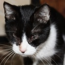 障害のある猫ですが里親さん募集です。ー保護した方が飼ってくださるこ...